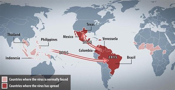 Zika Virüsü 5